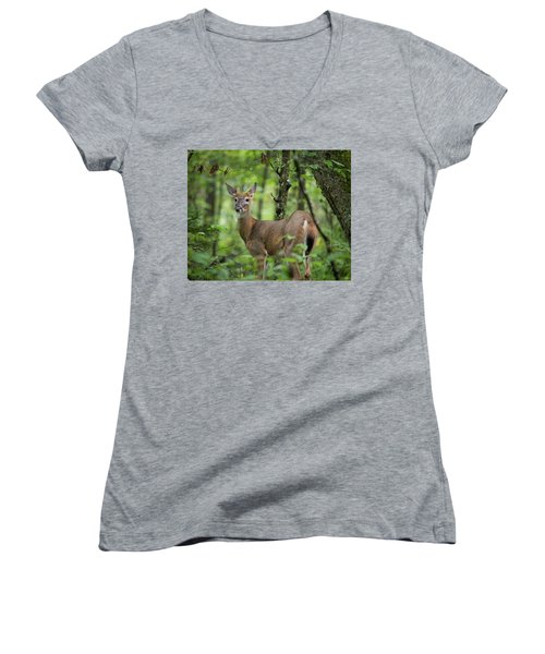 Young White-tailed Deer, Odocoileus Virginianus, With Velvet Antlers Women's V-Neck