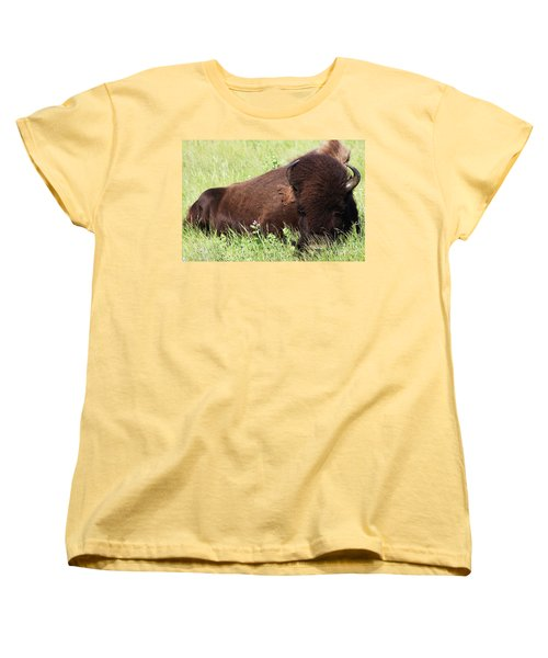 Bison Nap Women's T-Shirt (Standard Cut) by Alyce Taylor