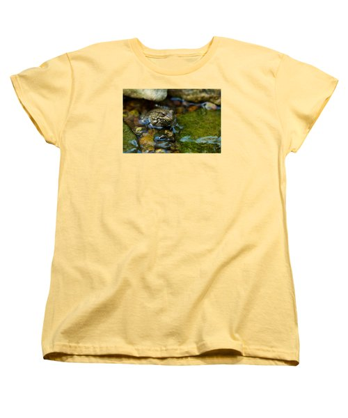 Is There A Prince In There? - Frog On Rocks Women's T-Shirt (Standard Cut) by Jane Eleanor Nicholas