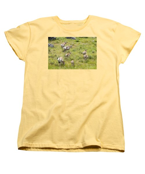 Pronghorn Antelope In Lamar Valley Women's T-Shirt (Standard Cut) by Belinda Greb