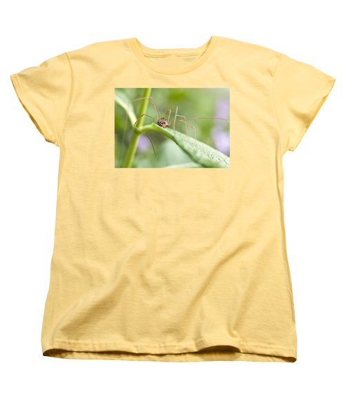 Women's T-Shirt (Standard Cut) featuring the photograph Creepy Crawly Spider by Jeannette Hunt