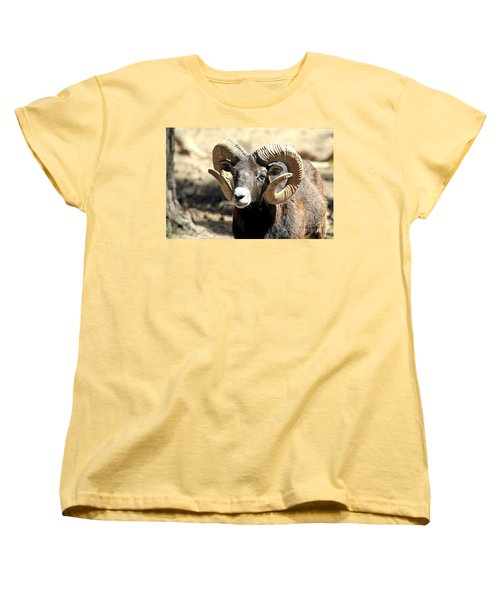 European Big Horn - Mouflon Ram Women's T-Shirt (Standard Cut)