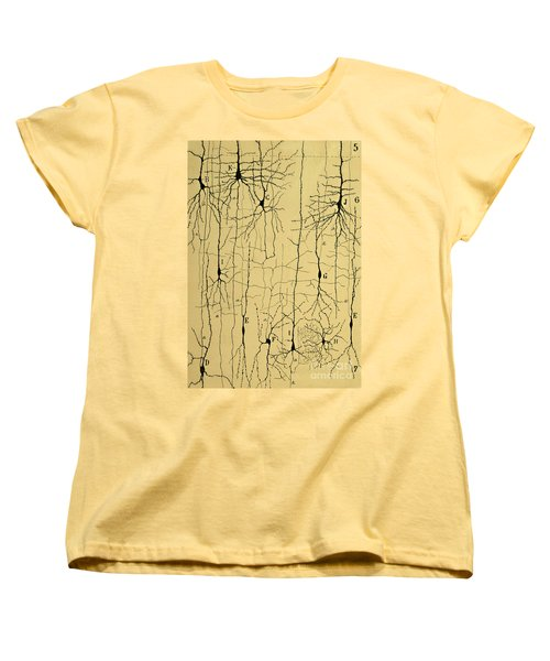 Cajal Drawing Of Microscopic Structure Of The Brain 1904 Women's T-Shirt (Standard Cut) by Science Source