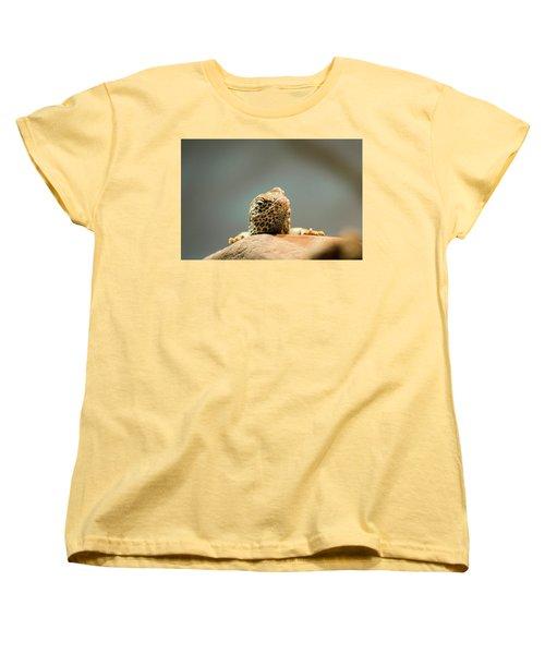 Curious Lizard Women's T-Shirt (Standard Cut) by David Stasiak