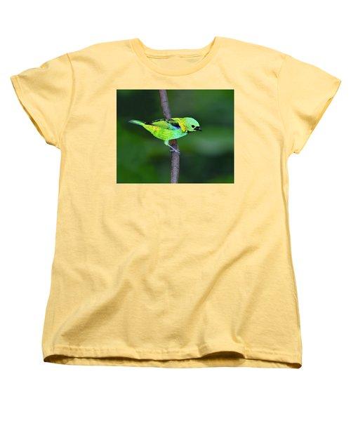Forest Edge Women's T-Shirt (Standard Cut) by Tony Beck