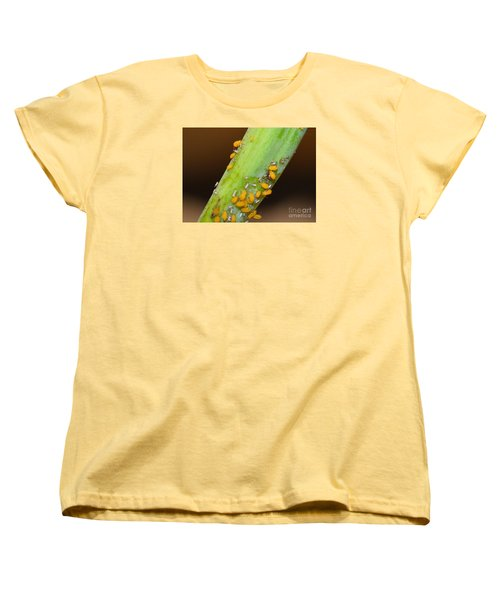 Golden Aphids Women's T-Shirt (Standard Cut) by Lew Davis