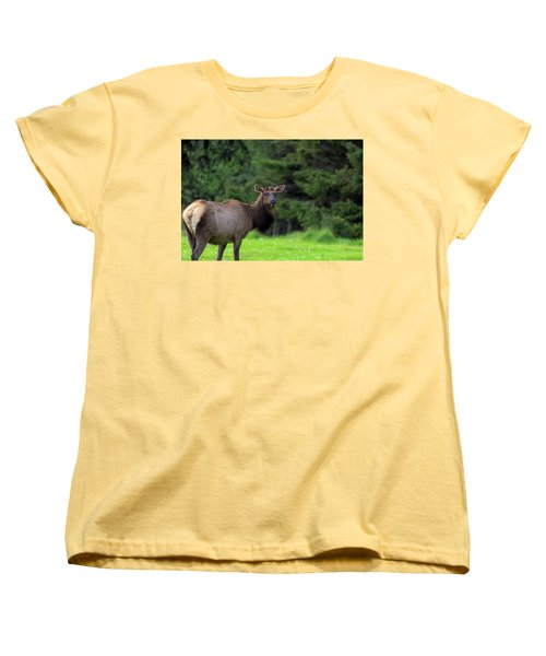 Lone Elk At Ecola State Park Women's T-Shirt (Standard Fit)