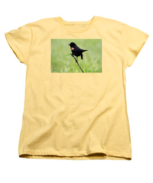Red Winged Blackbird Women's T-Shirt (Standard Cut) by Alyce Taylor