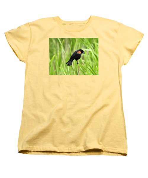 Red-winged Blackbird Women's T-Shirt (Standard Cut) by Brian Chase