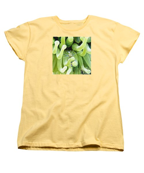 Shrimp And The Anemone Women's T-Shirt (Standard Cut) by Amy McDaniel