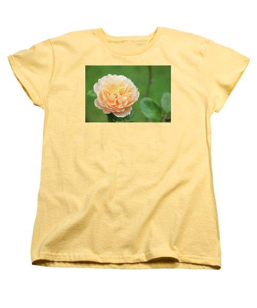 Yellow Rose In December Women's T-Shirt (Standard Cut) by Kelly Hazel