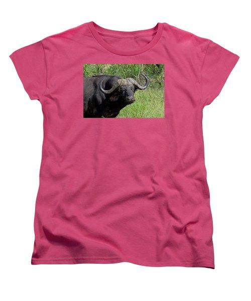 Cape Buffalo Women's T-Shirt (Standard Cut) by Tony Murtagh
