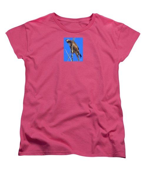 Hawk Close Up  Women's T-Shirt (Standard Cut) by Bobbee Rickard