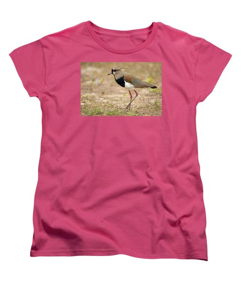 Close-up Of A Southern Lapwing Vanellus Women's T-Shirt (Standard Cut) by Panoramic Images