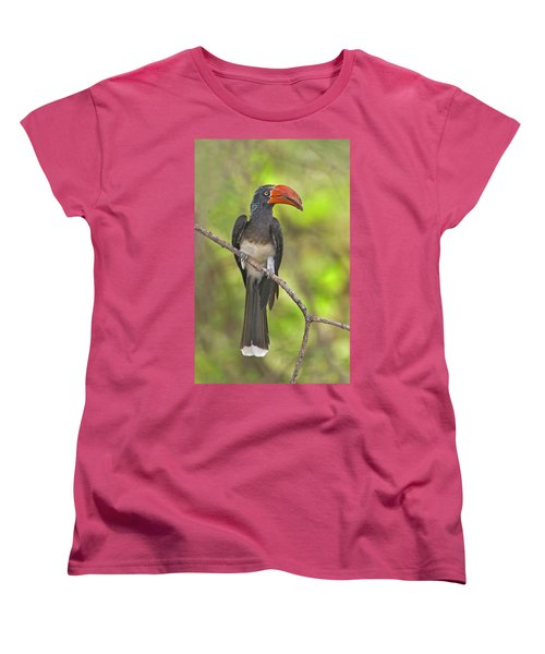 Crowned Hornbill Perching On A Branch Women's T-Shirt (Standard Cut) by Panoramic Images