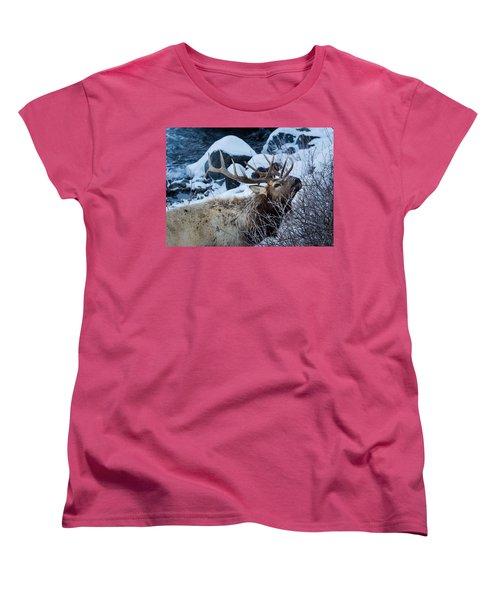 Grazing Elk Women's T-Shirt (Standard Cut)