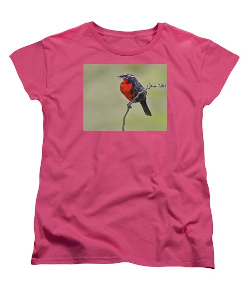 Long-tailed Meadowlark Women's T-Shirt (Standard Cut) by Tony Beck