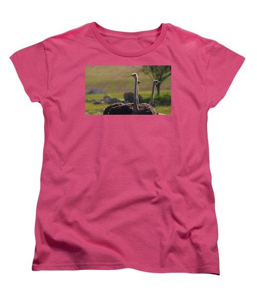 Ostriches Women's T-Shirt (Standard Cut) by Dan Sproul