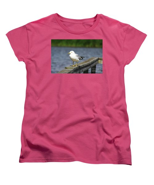 Ring-billed Gull Women's T-Shirt (Standard Cut) by Alyce Taylor