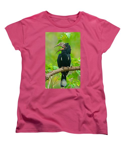 Silvery-cheeked Hornbill Perching Women's T-Shirt (Standard Cut) by Panoramic Images