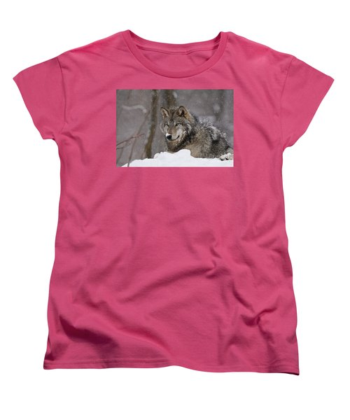 Snow Nose Women's T-Shirt (Standard Cut) by Wolves Only