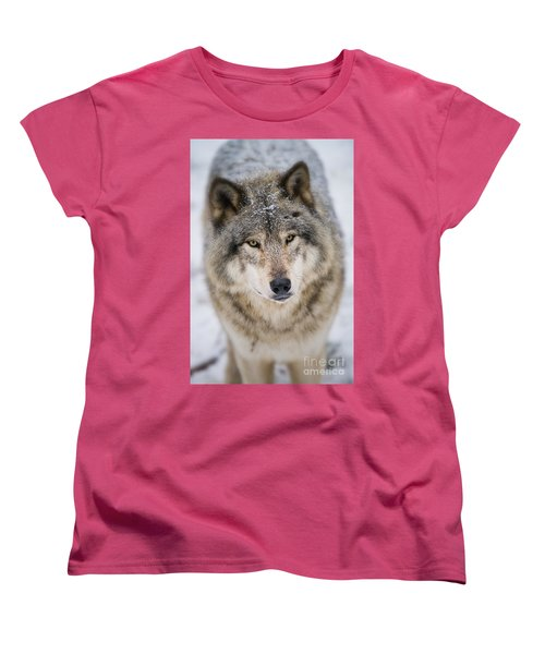 Timber Wolf Pictures 254 Women's T-Shirt (Standard Cut) by Wolves Only