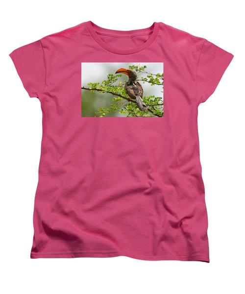 Yellow-billed Hornbill Women's T-Shirt (Standard Cut) by Bruce J Robinson
