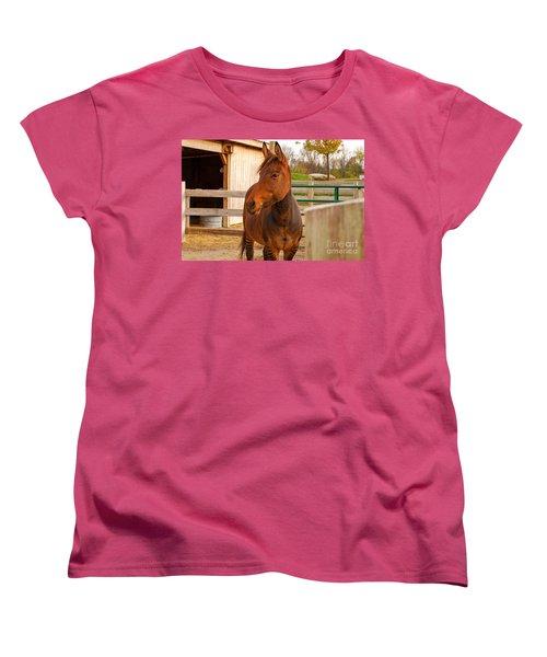Zorse Women's T-Shirt (Standard Cut) by Mary Carol Story