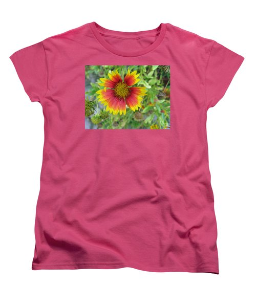 Women's T-Shirt (Standard Cut) featuring the photograph A Beautiful Blanket Flower by Ashish Agarwal