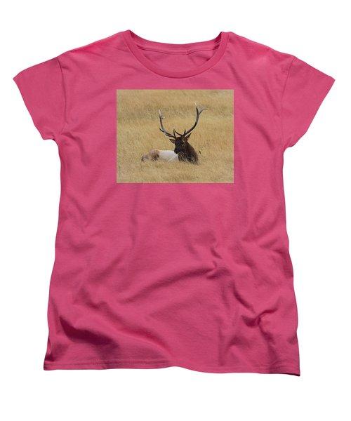 Elk In The Meadow Women's T-Shirt (Standard Cut) by Steve McKinzie