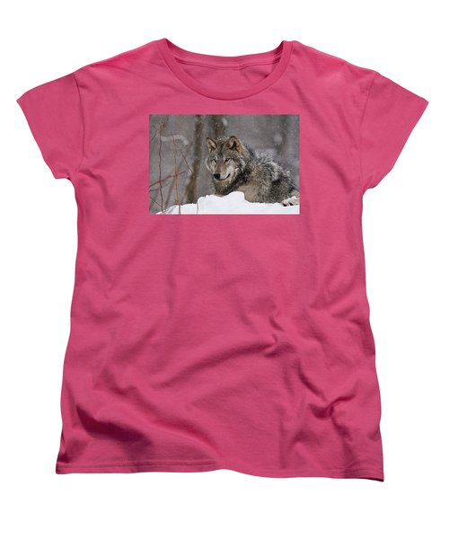 Timber Wolf In Winter Women's T-Shirt (Standard Cut) by Michael Cummings