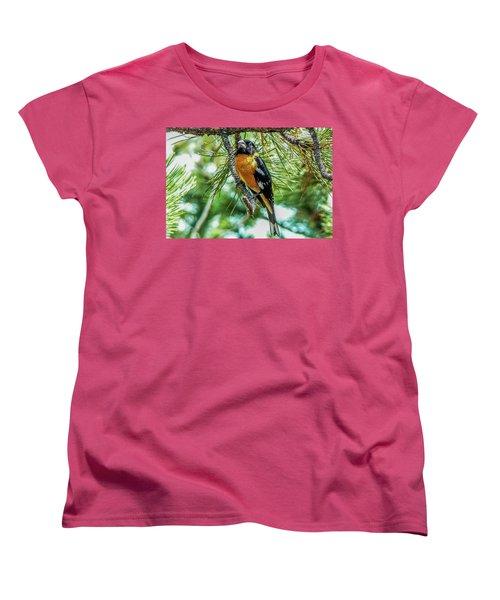 Black-headed Grosbeak On Pine Tree Women's T-Shirt (Standard Cut) by Marilyn Burton