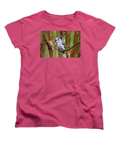 Blue Jay On A Branch Women's T-Shirt (Standard Cut) by Trina Ansel