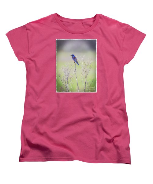 Bluebird On Hemlock Women's T-Shirt (Standard Cut) by Mitch Shindelbower