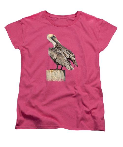 Brown Pelican - Preening - Transparent Women's T-Shirt (Standard Cut) by Nikolyn McDonald