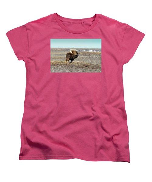 Bull Musk Ox Women's T-Shirt (Standard Cut) by Anthony Jones