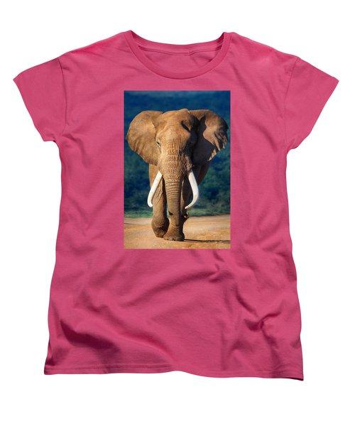 Elephant Approaching Women's T-Shirt (Standard Cut) by Johan Swanepoel