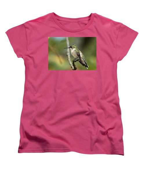 Female Ruby-throated Hummingbird On Branch Women's T-Shirt (Standard Cut) by Sheila Brown