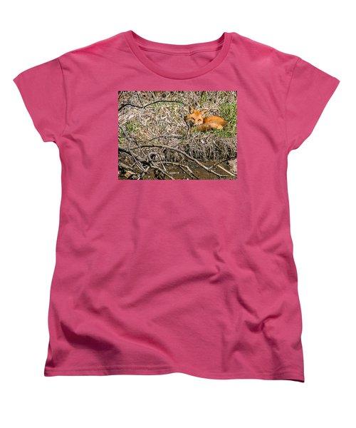 Fox Napping Women's T-Shirt (Standard Cut) by Edward Peterson
