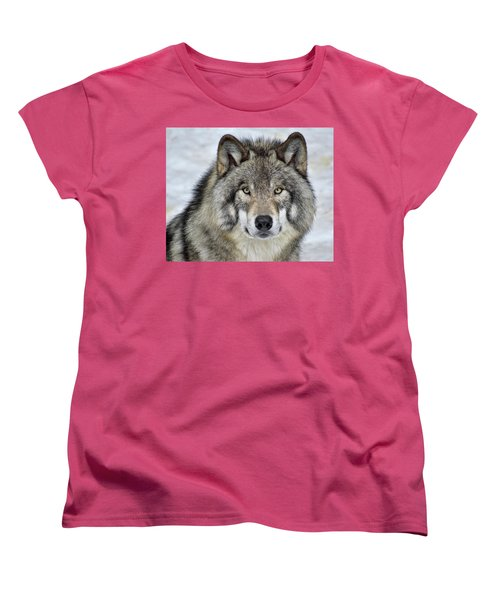 Women's T-Shirt (Standard Cut) featuring the photograph Full Attention  by Tony Beck