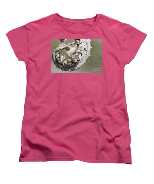 Women's T-Shirt (Standard Cut) featuring the photograph Furrow Orb Weaver On A Dry Thisle Leaf by Jivko Nakev