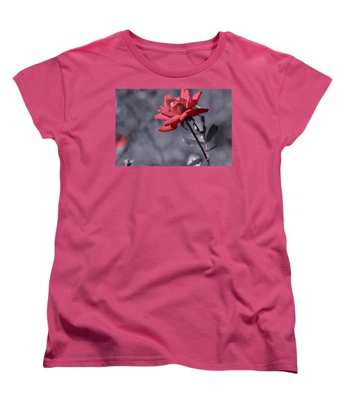 In Full Bloom 2 Women's T-Shirt (Standard Cut) by Warren Thompson