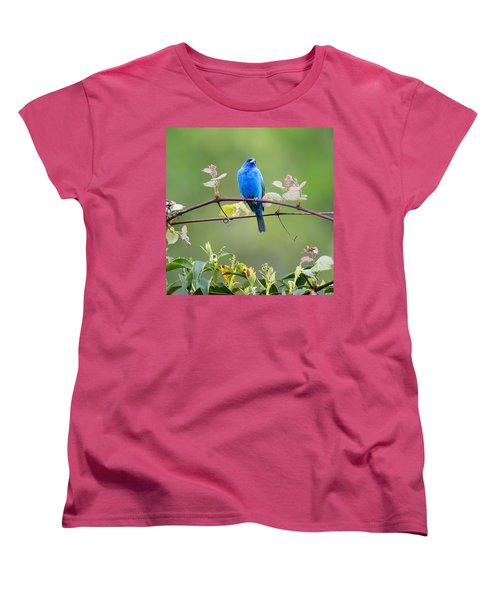 Indigo Bunting Perched Square Women's T-Shirt (Standard Cut) by Bill Wakeley