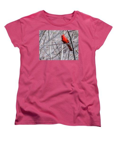 Northern Cardinal Feeding Women's T-Shirt (Standard Cut) by Edward Peterson