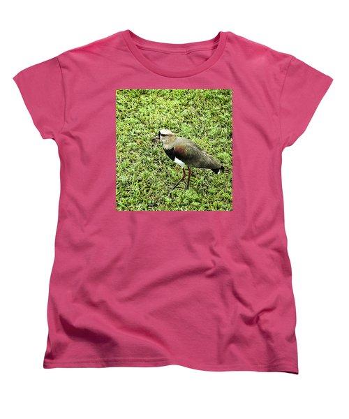 Southern Lapwing Women's T-Shirt (Standard Cut) by Norman Johnson