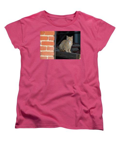Street Cat Women's T-Shirt (Standard Cut) by Scott Warner