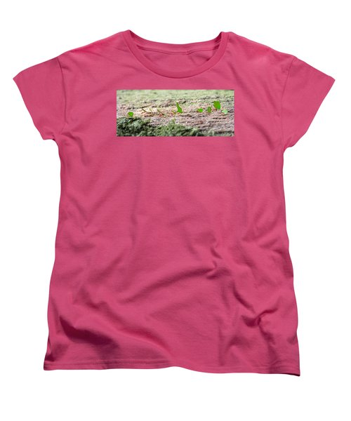 The Leaf Parade  Women's T-Shirt (Standard Cut) by Betsy Knapp