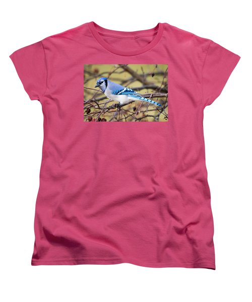 The Winter Blue Jay  Women's T-Shirt (Standard Cut) by Ricky L Jones