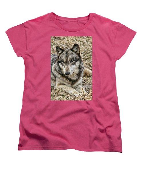 Wolf Portrait Women's T-Shirt (Standard Cut) by Shari Jardina