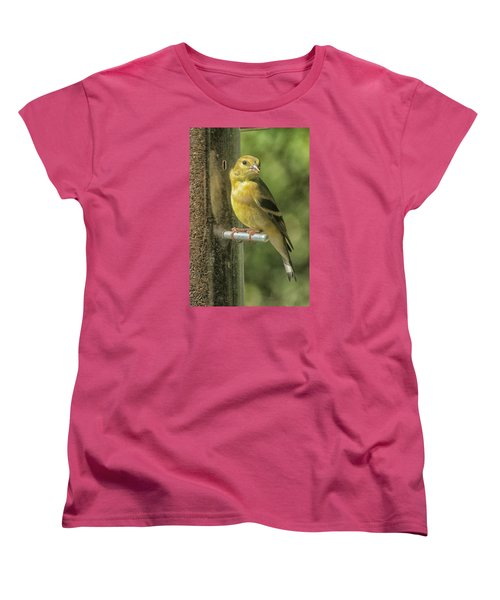 Young Goldfinch Women's T-Shirt (Standard Cut) by Constantine Gregory